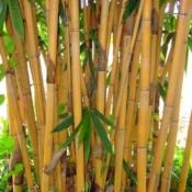 Golden Bamboo - Luxury Entertainment meets Colorful Custom Retreat - Gilbert, AZ - LADiva Artistry Landscape Design Solutions